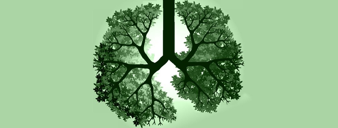A tree growing in the shape of lungs.