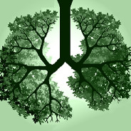 Do I Have a Family History of Lung Cancer? image