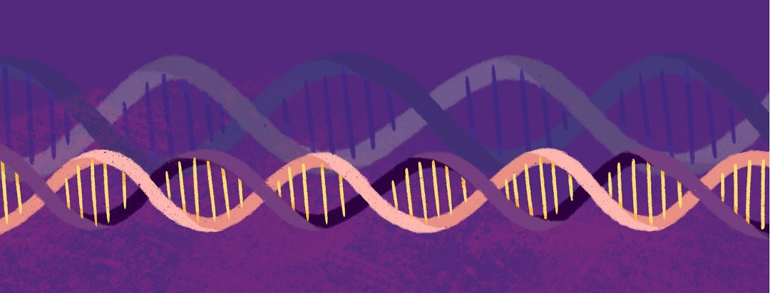 Strands of DNA run side by side